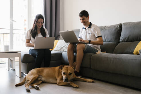 Smiling couple using laptops near dog in living room at home - EGAF00438