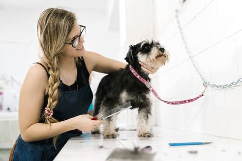 Smiling female groomer brushing schnauzer on table in pet salon - EGAF00481