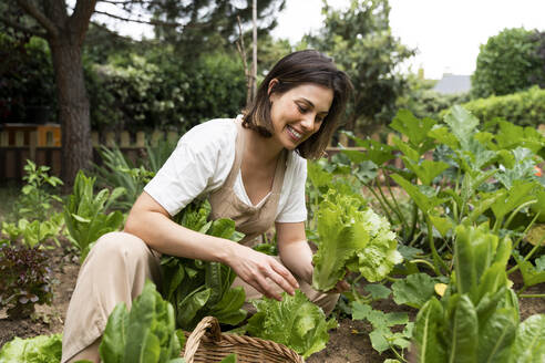 Smiling young woman picking lettuce in vegetable garden during curfew - AFVF06827