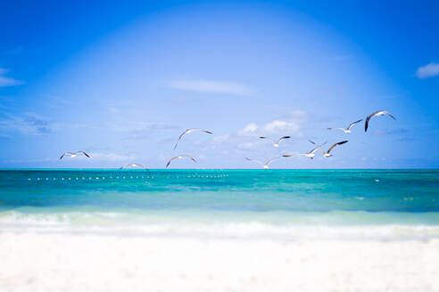 A flock of birds flying over the turquoise Caribbean waters - CAVF87461