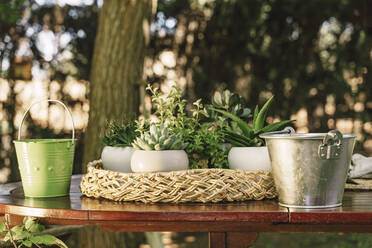 Close-up of potted plants with buckets on wooden table in yard - ERRF04127