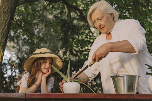 Grandmother planting on table while standing with granddaughter in yard - ERRF04169
