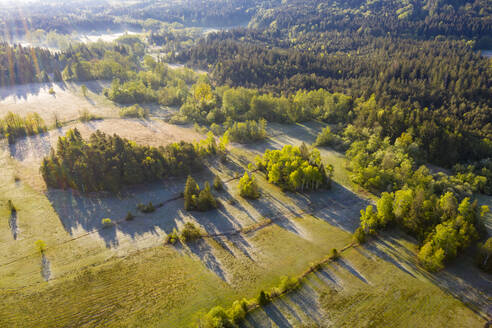 Drone view of green summer forest at dawn - LHF00819