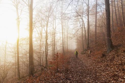 Germany, Rhineland-Palatinate, Lone hiker walking in Palatinate Forest at foggy winter sunrise - GWF06684