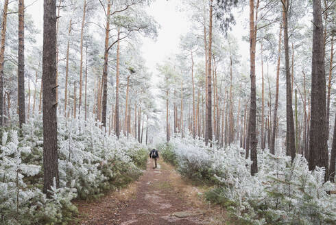 Germany, Rhineland-Palatinate, Lone hiker walking in frosted Palatinate Forest - GWF06693