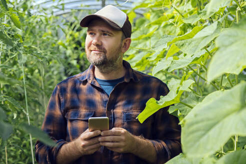 Portrait of a farmer with mobile phone in a greenhouse - KNTF05156
