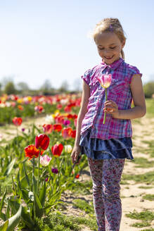 Smiling girl holding tulip while standing in field against clear sky during sunny day - JFEF00954