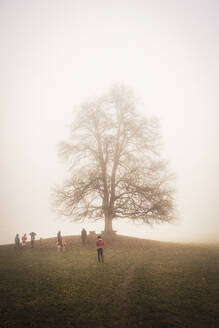 People at a large tree in foggy landscape - DHEF00243