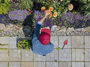 Young man crouching in garden, taking care of roses - KNTF05272