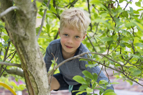 Cute blond boy climbing tree branch - MOEF03173