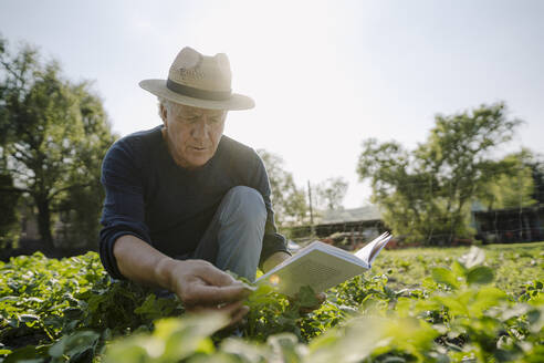 Wrinkled man with book examining crop against clear sky during sunny day - GUSF04391
