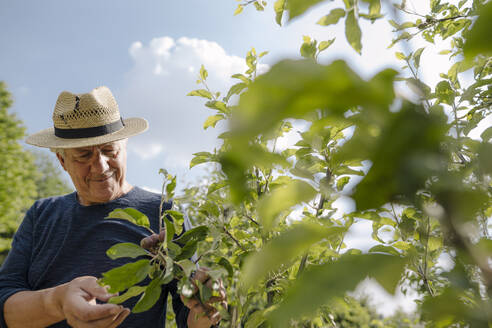 Confident wrinkled man wearing hat looking at crop in agricultural field - GUSF04421