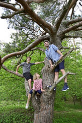Father playing with children while standing on tree branch in forest - ECPF01022