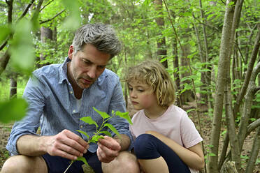 Man holding leaf while talking to daughter in forest - ECPF01034