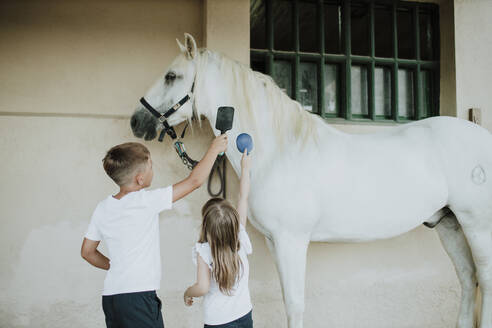 Siblings brushing white horse while standing by wall - GMLF00588