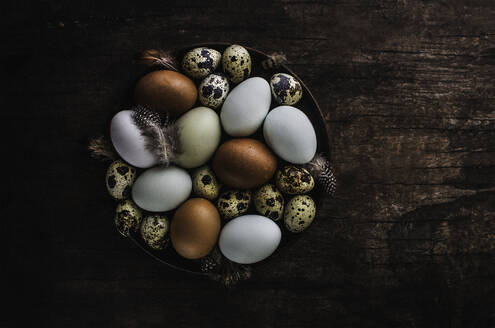 Speckled quail eggs and feathers in bowl - CAIF29479