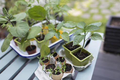 Tiny potted plants on patio table - CAIF29609