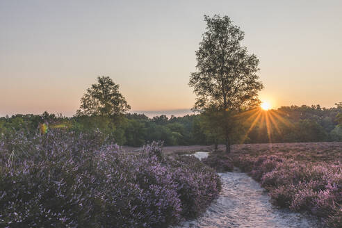 Germany, Hamburg, Fischbeker Heide, Heather field and trees at sunrise - KEBF01693