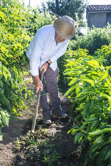 Senior man wearing hat shoveling in vegetable garden - JCMF01504