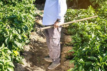 Senior man holding shovel while standing on land amidst plants in vegetable garden - JCMF01507