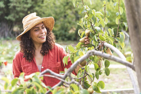 Smiling woman looking at fresh pears at vegetable garden - FMOF01205