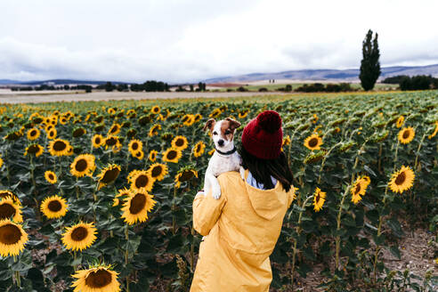 Young woman standing in front of sunflower field with pet dog in hands - EBBF00868