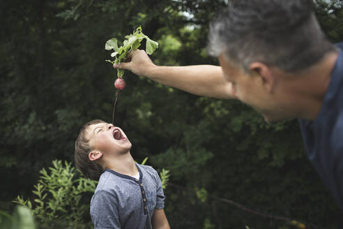 Playful father holding radish over son with open mouth while gardening at back yard garden - HMEF01096