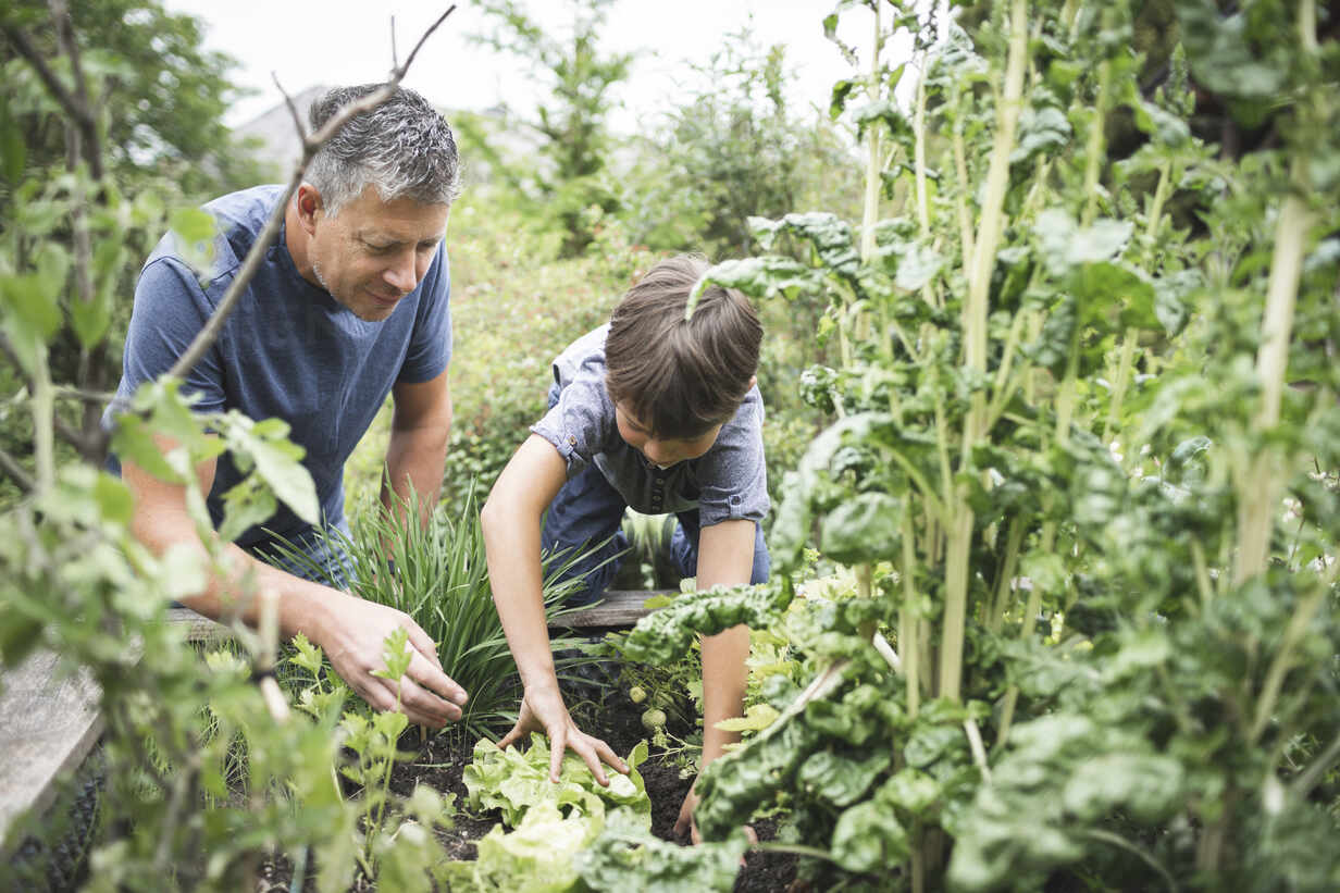 Father looking at son gardening raised bed at back yard - HMEF01099 - Epiximages/Westend61