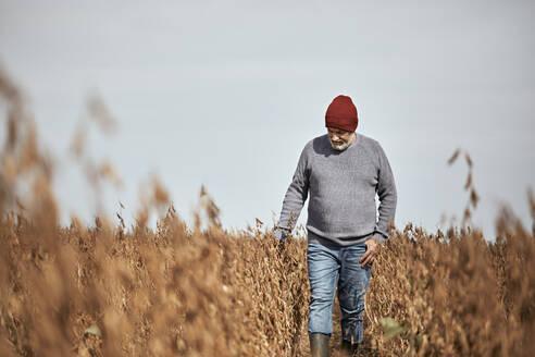 Farmer wearing knit hat examining crop while walking in field against clear sky - ZEDF03962