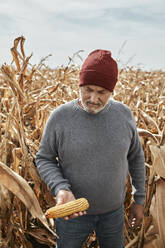 Man holding corn while standing at corn farm - ZEDF03986