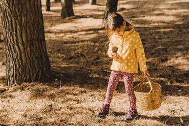 Cute girl looking at pine cone while carrying wicker basket in park on sunny day - ERRF04605