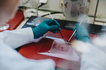 Scientist preparing human brain slide on glass at laboratory - MFF06514