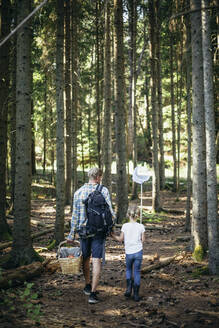 Rear view of father holding picnic basket while daughter with fishing net walking in forest - MASF20206
