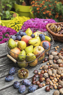 Garden table filled with autumn harvest of nuts and fruits - GWF06772