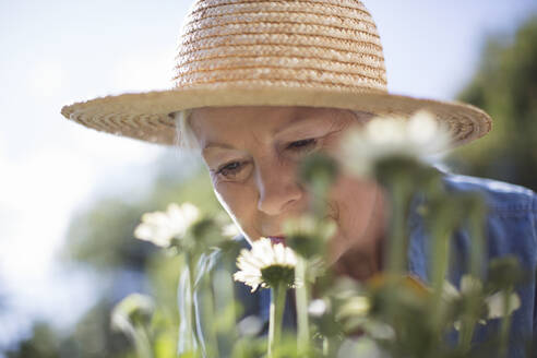 Close up senior woman in straw hat smelling flowers in garden - CAIF29890