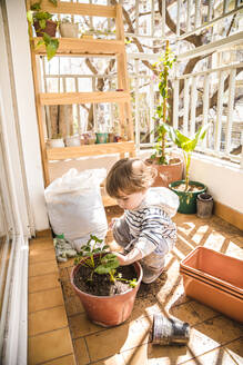 Boy planting strawberry in flower pot while sitting at balcony - FLMF00311