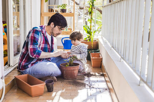 Father and 1 year-old son planting strawberries in a pot in a balcony - FLMF00317