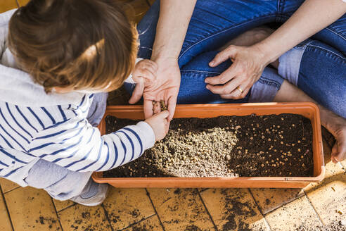 Boy helping mother while planting seed in pot at balcony - FLMF00326
