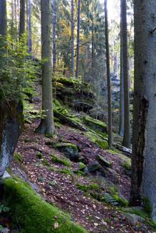 Malerweg trail in Elbe Sandstone Mountains - JTF01720