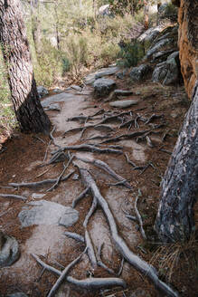 Rock path on mountain in forest at La Pedriza, Madrid, Spain - MRRF00652