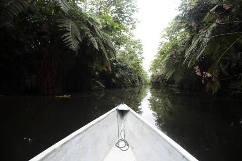 Napo, Ecuador Traveling photographer taking pictures in the Ecuadorian Amazon - DSIF00196