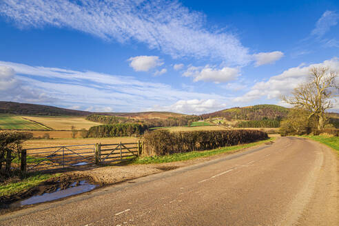 Empty country road in rural landscape on sunny day - FLMF00356