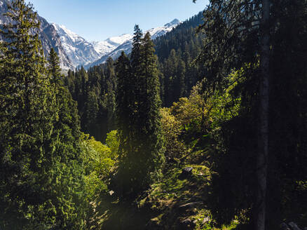 Green forested valley in Himalayas - JMPF00687