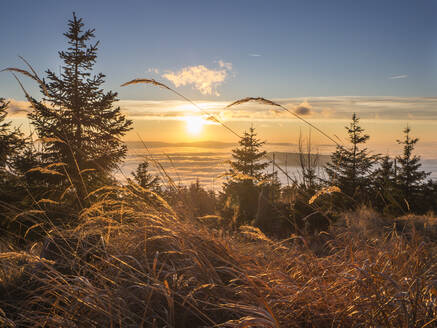 Reeds moving against sun setting over foggy valley in Bavarian Forest - HUSF00149