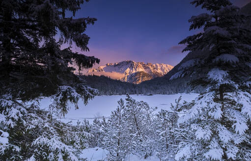 Trees covered with snow and mountain during sunset - MRF02408