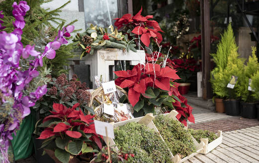 Christmas decorations and plants outside flower shop - JCCMF00685