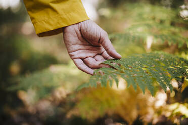 Womans hand touching fern in forest - EBBF02101