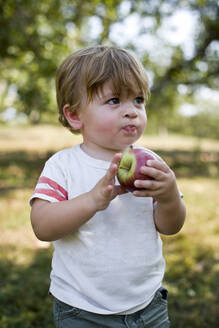 Baby boy eating apple in park - ISPF00009