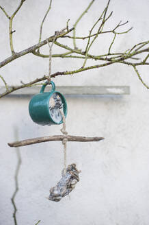 Cup with bird food hanging on tree branch - GISF00735