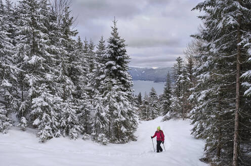 Woman waking with hiking poles in snow covered landscape - MRF02450